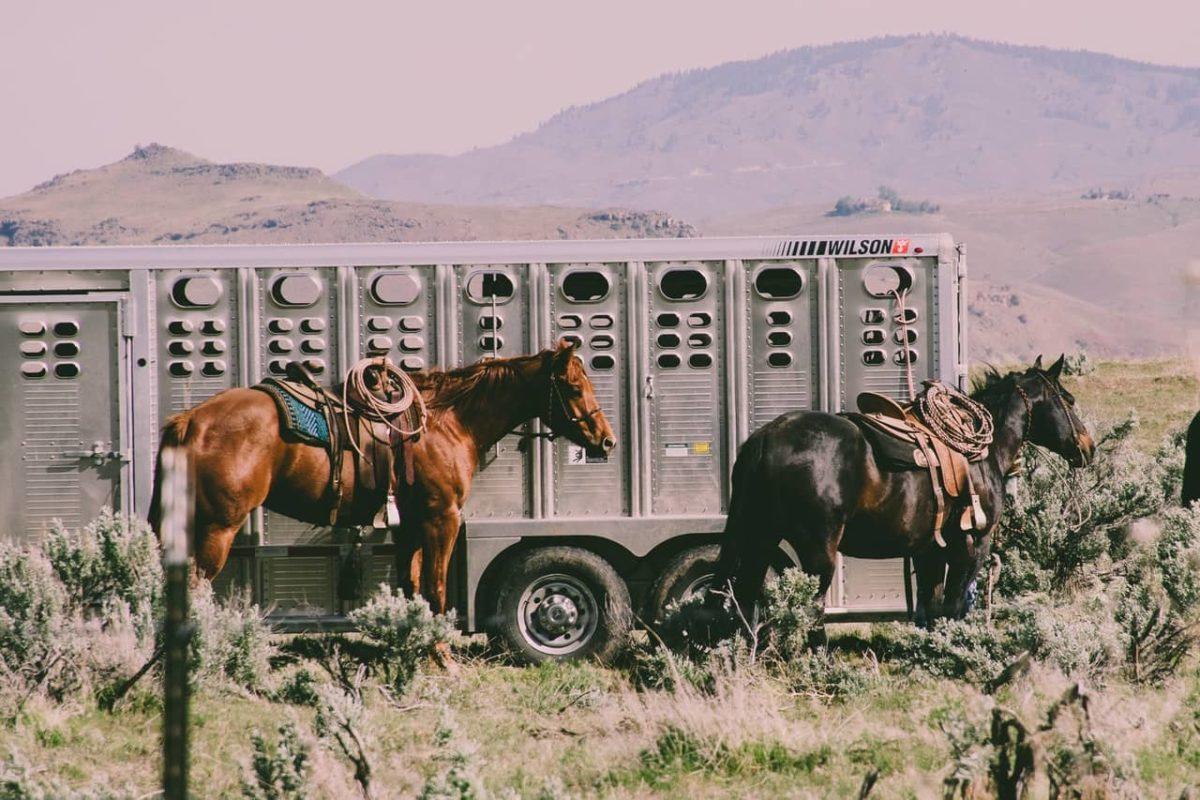Hestetrailer leasing