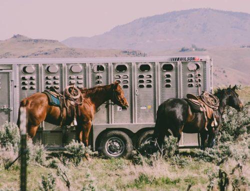 Leasing hestetrailer